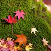 秋のデートスポット・・・紅葉