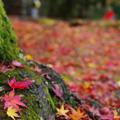 秋の紅葉・・・関西デートスポット(京都水族館と東福寺)