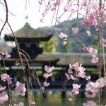 京都でお花見デート (おすすめコース編)