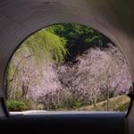 MIHO MUSEUM でお花見・美術館デート