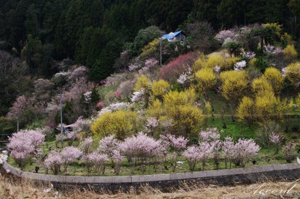 西吉野の桃源郷